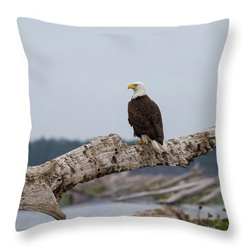 Bald Eagle #1 Throw Pillow