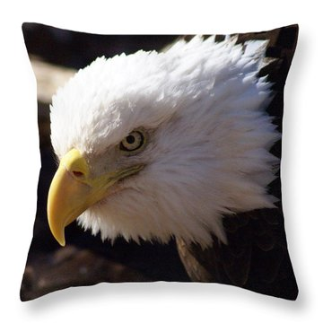 Bald Eagle 2 Throw Pillow by Marty Koch