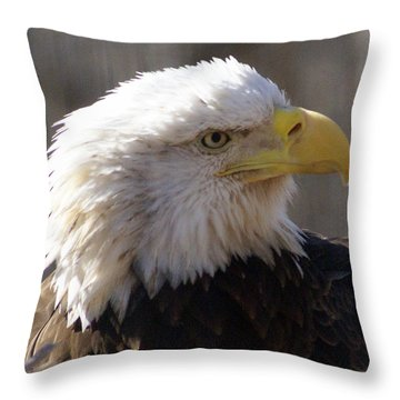 Bald Eagle 3 Throw Pillow by Marty Koch