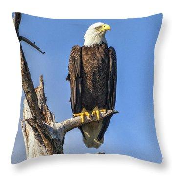 Bald Eagle 6366 Throw Pillow