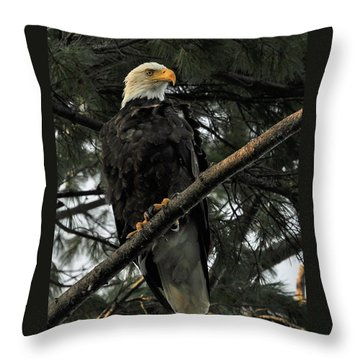 Throw Pillow featuring the photograph Bald Eagle by Glenn Gordon