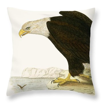Bald Eagle Throw Pillow by English School