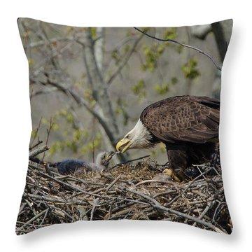 Bald Eagle Feeding Throw Pillow by Ann Bridges