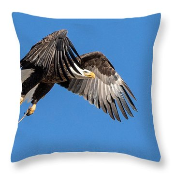 Bald Eagle Flight 3 Throw Pillow