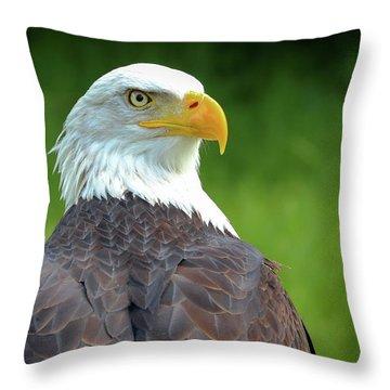 Bald Eagle Throw Pillow by Franziskus Pfleghart