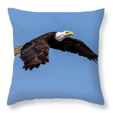 Bald Eagle Gaining Altitude Throw Pillow