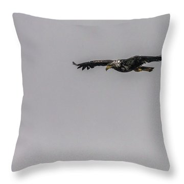 Throw Pillow featuring the photograph Bald Eagle Gliding by Timothy Latta