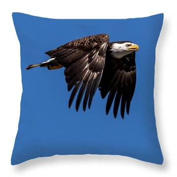 Throw Pillow featuring the photograph Bald Eagle Hunting by Rob Green