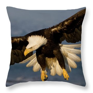 Bald Eagle In Action Throw Pillow