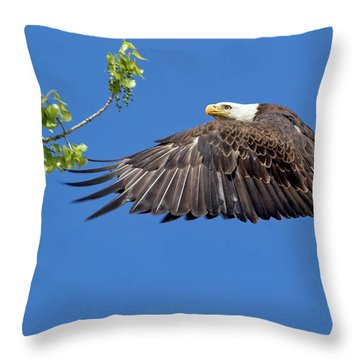 Bald Eagle In Flight 4-25-17 Throw Pillow