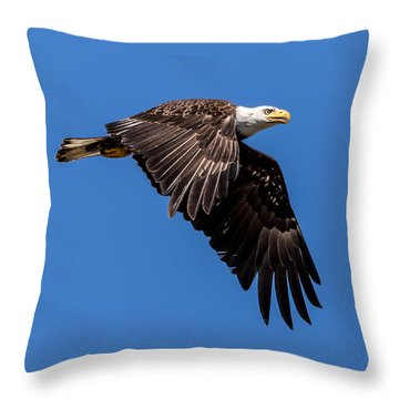 Throw Pillow featuring the photograph Bald Eagle In Flight by Rob Green
