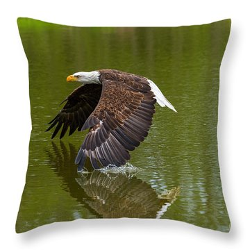 Bald Eagle In Low Flight Over A Lake Throw Pillow