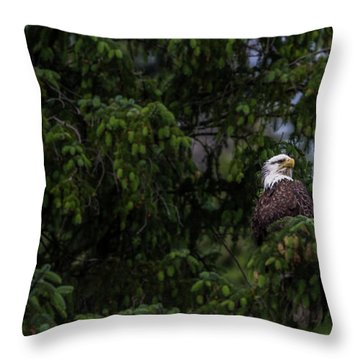 Throw Pillow featuring the photograph Bald Eagle In The Tree by Timothy Latta