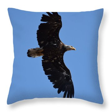 Bald Eagle Juvenile Soaring Throw Pillow