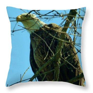 Bald Eagle Keeping Guard Throw Pillow