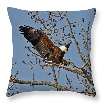 Bald Eagle Landing Throw Pillow