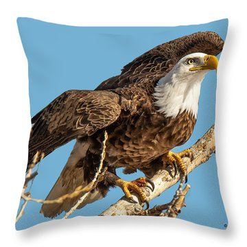 Bald Eagle Launch Throw Pillow