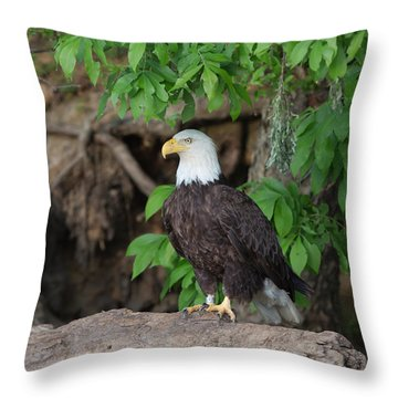 Bald Eagle On Log Throw Pillow
