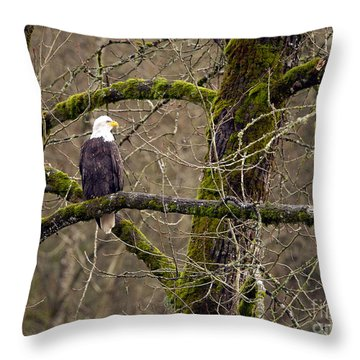Bald Eagle On Mossy Branch Throw Pillow by Sharon Talson