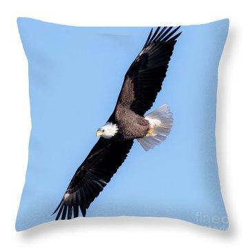 Bald Eagle Overhead  Throw Pillow by Ricky L Jones