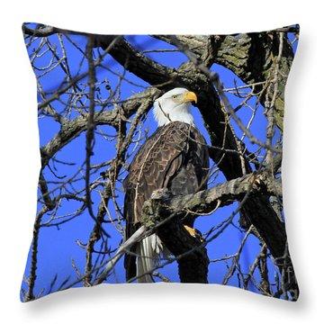 Throw Pillow featuring the photograph Bald Eagle by Paula Guttilla
