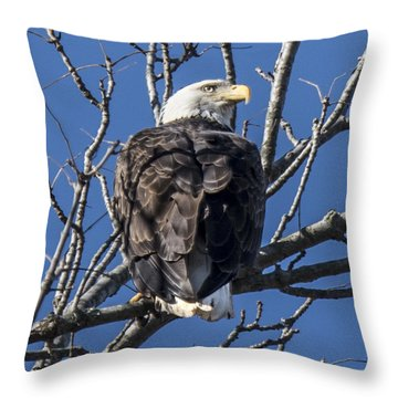 Bald Eagle Perched Throw Pillow