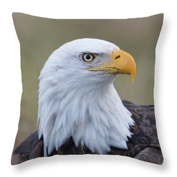 Throw Pillow featuring the photograph Bald Eagle Portrait 2 by Angie Vogel