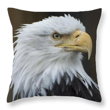 Bald Eagle Portrait Throw Pillow by Gary Lengyel
