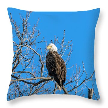 Bald Eagle Pride Throw Pillow