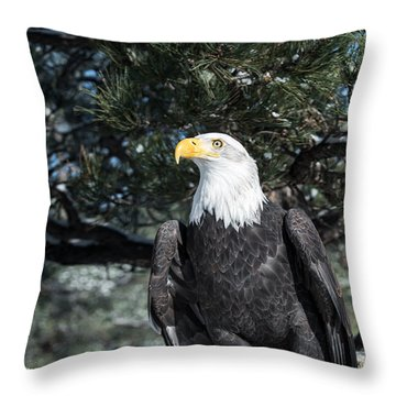 Bald Eagle Ready For Flight Throw Pillow