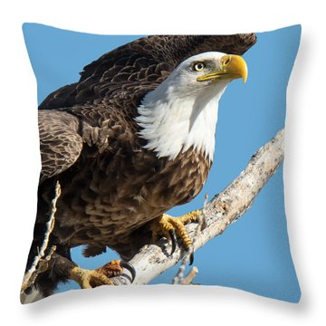 Bald Eagle Ready To Launch Throw Pillow