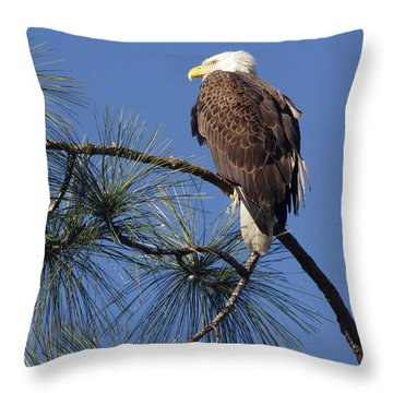Bald Eagle Throw Pillow by Sally Weigand