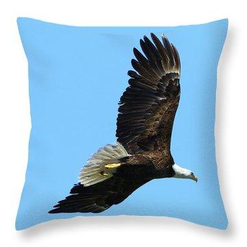 Throw Pillow featuring the photograph Bald Eagle Series IIi by Deborah Benoit