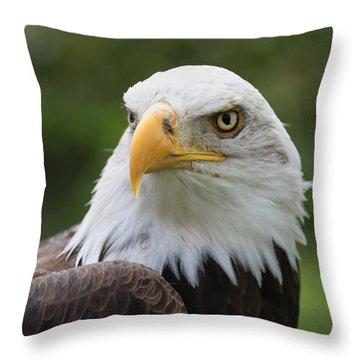 Bald Eagle Slick Back Throw Pillow