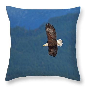 Throw Pillow featuring the photograph Bald Eagle Soaring  by Sharon Talson