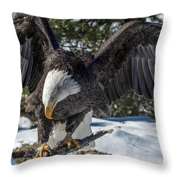 Bald Eagle Spread Throw Pillow
