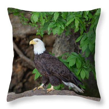 Bald Eagle Standing On Log Throw Pillow
