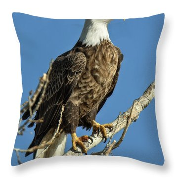 Bald Eagle Standing Tall Throw Pillow