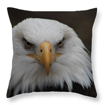 Bald Eagle Stare  Throw Pillow