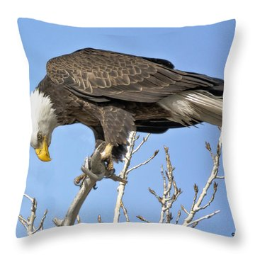Throw Pillow featuring the photograph Bald Eagle Watching A Magpie by Stephen  Johnson