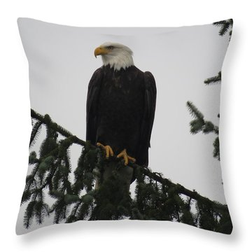 Bald Eagle Watching Throw Pillow