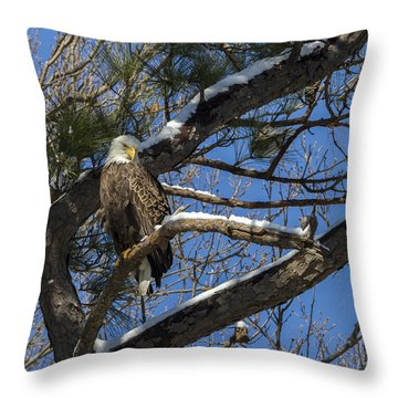 Bald Eagle Watching Her Domain Throw Pillow