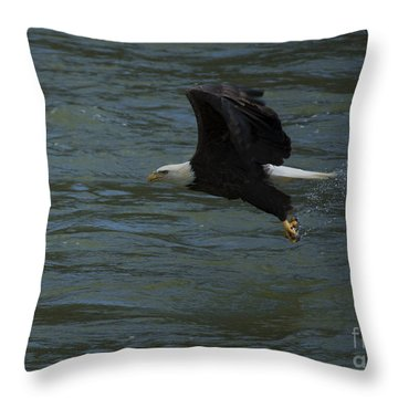 Bald Eagle With Fish In Claws Flying Over The French Broad River, Tennessee Throw Pillow