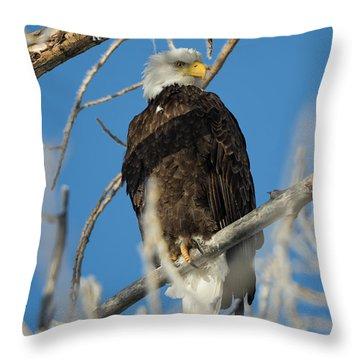 Bald Eagle With Pogo Nip Throw Pillow