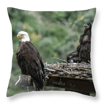 Bald Eaglet Cooling Off On A Hot Spring Day Throw Pillow
