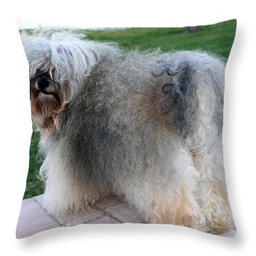 ball of fur Havanese dog Throw Pillow by Sally Weigand
