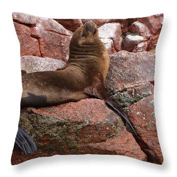 Ballestas Island Fur Seals Throw Pillow by Aidan Moran