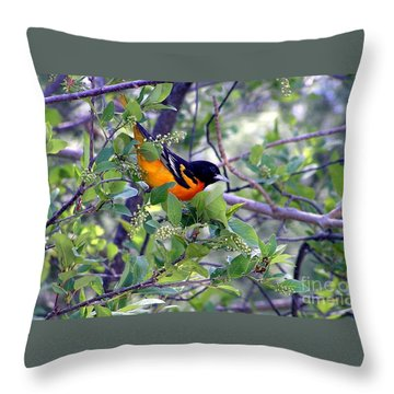 Baltimore Northern Oriole Throw Pillow
