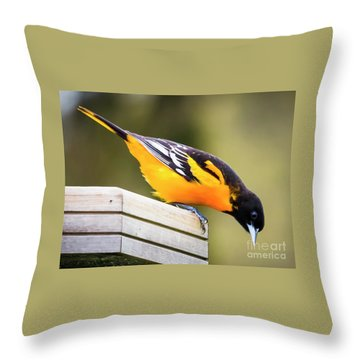 Throw Pillow featuring the photograph Baltimore Oriole About To Jump by Ricky L Jones