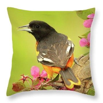 Baltimore Oriole Among Apple Blossoms Throw Pillow by Max Allen